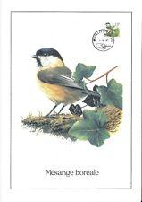 FDC 2732 - Oiseau Buzin sur gravure format A4 !