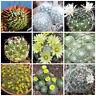20 semi in miscuglio di Dolichothele mix ,piante grasse,seed cactus mix