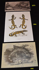 Seven (7) Gila Monster / Beaded Lizard Collectibles Package - Save $!