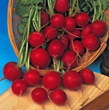 légumes radis tôt écarlate GLOBE environ 1000 graines