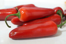 Red Jalapeno Hot Chili Pepper Seeds 50 PCS