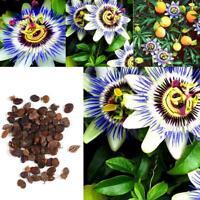Passiflora Caerulea Passionsblume Samen Bonsai Obst Blumensamen CHPH