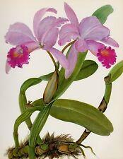 Botanical Art Pink Orchid Print Wall Art Cottage Decor Cattleya Trianae #1926