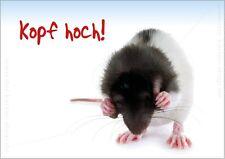 """Lustige Tierpostkarte Postkarte Grußkarte Ratte """"Kopf hoch!"""" Gute Besserung!"""
