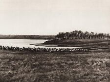 1925 Vintage CANADA ~ WAPITI ELK Buffalo Park Lake Alberta Landscape Photo Art
