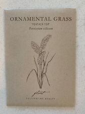 Ornamental Grass 'Feathertop' (Pennisetum villosum) Floret 2020 Seeds