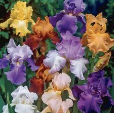 Bearded Iris mixed colors 5 bulbs (BUY 20 Bulbs Get 10 Free)