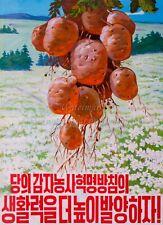 North KOREA DPRK Propaganda Poster Print AGRICULTURE - POTATOES A3 + #D153