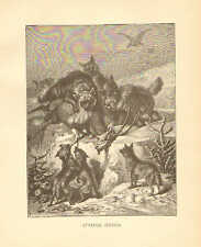 Striped Hyena, by Specht, Zoology, Vintage, 1885 Antique Art Print.r