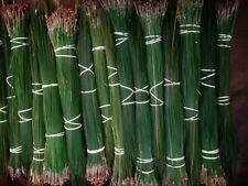 "alabama longleaf pine needles 10lbs green 14 to 17"""
