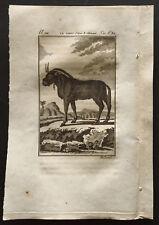 1799 - Buffon - El wildebeest - Grabado zoología