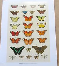 Natural History Tropical Butterflies  15x12 Offset Lithograph