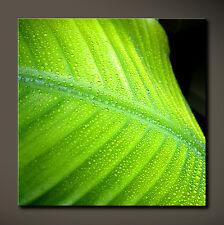 FRESH TOUCH Leinwand Bild Bilder Grün Blatt Schwarz Abstract Cool Deko NoPoster