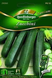 Saatgut - Samen Zucchini Leila 290365 Quedlinburger AR5454