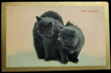 "OLD POSTCARD OF A CATS / KITTENS - ""LITTLE SPITFIRES"""