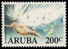 """ARUBA 45 - Maripampun Flower """"Omphalophalmum rubrum"""" (pb18709)"""