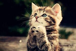 CUTE CAT A3 POSTER PRINT ART CAT01 - BUY 2 GET 1 FREE!!!