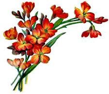 20 Water Slide Nail Art Decal Transfers Orange Flowers Corner Tip 3/8 Inch