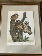 "John A Ruthven (b1924) ""Saw Whet Owls"" Limited Edition Print 507/1500 - Signed"