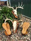 European Deer Skull Mount Taxidermy Wall Plaque Pedestal Table Supplies