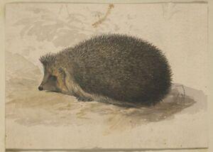 Edward Lear 1830s Hedgehog 7x5 inch Print