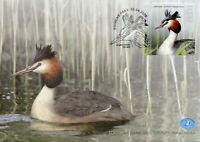 Estonia Birds on Stamps 2020 FDC Great Crested Grebes Bird of Year 1v Set