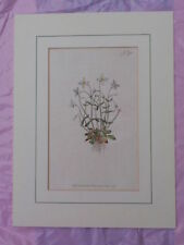 Small (up to 12in.) Original Botanical Art Prints
