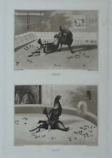 Original Old Engraving: Henry Alken Cock Fighting : Folio Sheet : FREE P&P