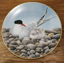 The 12 Waterbird Plates from Danbury Mint Tern Porcelain Plate