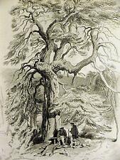 Edwin Landseer Larch Fir Tree Scotland Deerhounds Skye Terrier 1870 Print Matted