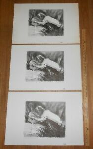 3 Harry E Buckley pencil signed lithographs -  The Naturalist - 1980 limited ed