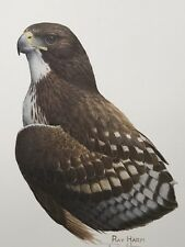 FINE ART LITHOGRAPH: Red Tailed Hawk By Ray Harm 12 X  16 Signed And Numbered