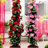 100 PCS Seeds Mandevilla Sanderi Dipladenia Potted Bonsai Flowers Plants Garden