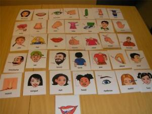 BODY PARTS FLASH CARDS IN POUCH FREE POSTAGE