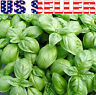250+ ORGANICALLY GROWN Genovese Basil Seeds Heirloom Italian NON-GMO Fragrant US