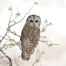 4 x Single Paper Napkins/3 Ply/Decoupage/Craft/Wildlife/Tawny Owl