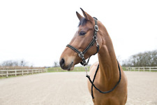 HORZE COOPER HALTER AND LEAD SET BL XFUL