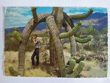 Saguaro Cactus USA Picture Postcard