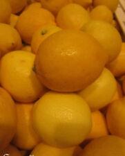 ♫ CITRONNIER des 4 Saisons -Citrus limon ♫ Pépins ♫ Citrons : Fruits Gustatifs ♫