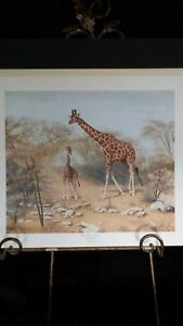 Quiet Time in Sambura by Charles Frace Reticulated Giraffe