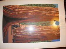 "Rob Goldberg ""Black Bears and Big Trees"" Serigraph S/N 15/141"