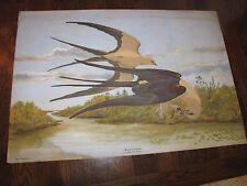REX BRASHER Original Watercolor Painting Birds Signed Swallowtail Kites