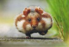 Ansichtskarte: ein Hamster hat's eilig - running hamster