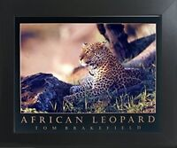 African Jungle Leopard Wildlife Animal Wall Decor Framed Art Print Picture