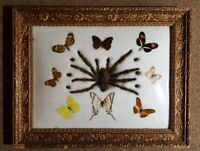 VINTAGE FRAMED SPIDER, BEETLE & BUTTERFLY TAXIDERMY DISPLAY UNDER DOMED GLASS