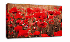 """Red Poppies Floral Canvas Art Print Picture Framed 34"""""""