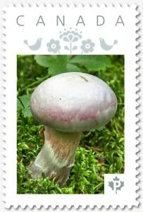 """WHITE MUSHROOM = """"P""""- rate = VERTICAL Picture Postage Canada 2019 [p19-06s05]"""