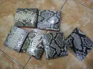 20 python wallet