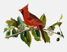 10% Off Scarlet Quince X-stitch Chart - Cardinal Grosbeak (male) - Regular Print