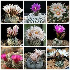100 seeds of Turbinicarpus mix, cacti mix, succulents seeds mix R